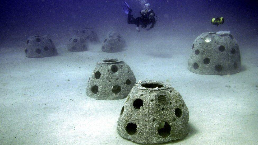 Eternal Reefs
